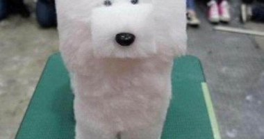 17 Most Hilarious Pet Haircut Fails That You Can't Help Laughing