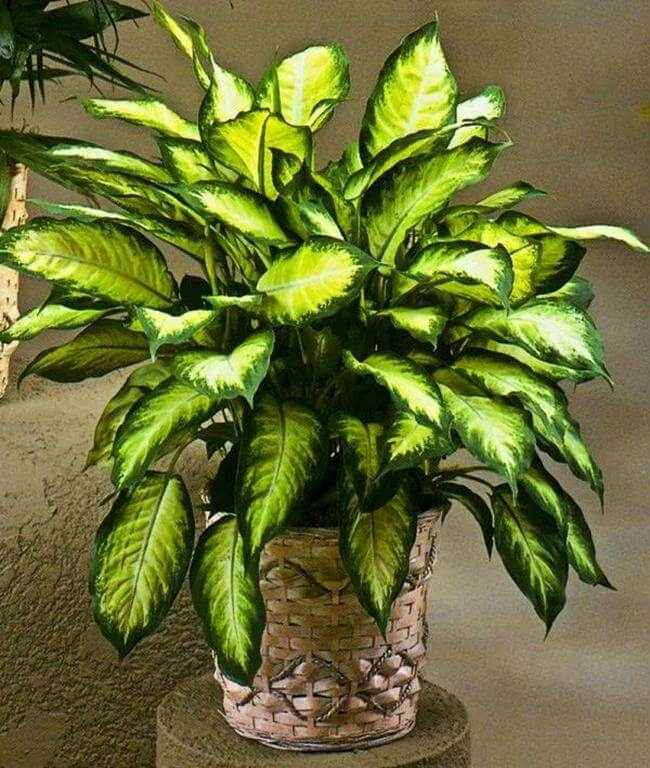 20+ Best Ornamental Air-Purifying Plants That Really Work In Your Home