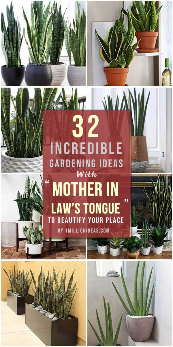 "32 Incredible Gardening Ideas With ""Mother In Law's Tongue"""