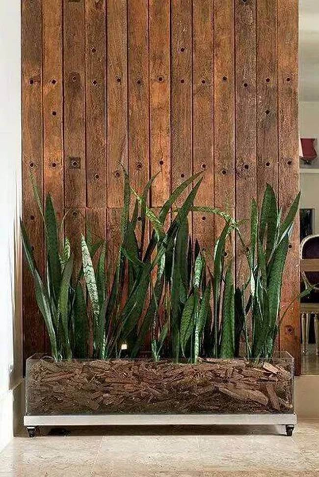 32 Incredible Gardening Ideas With Mother In Laws Tongue To Beautify Your Place