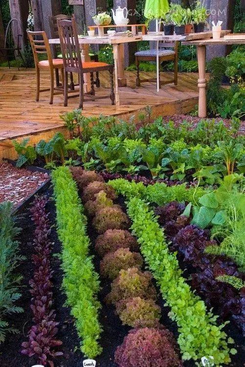 DIY Vegetable Garden Designs