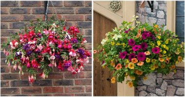 10-Awesome-Hanging-Baskets-of-Flowering-Plants-ft