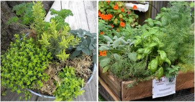 10-Best-Herbs-To-Grow-Together-in-A-Pot-ft