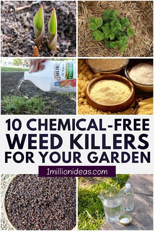 10 Chemical-Free Weed Killers For Your Garden