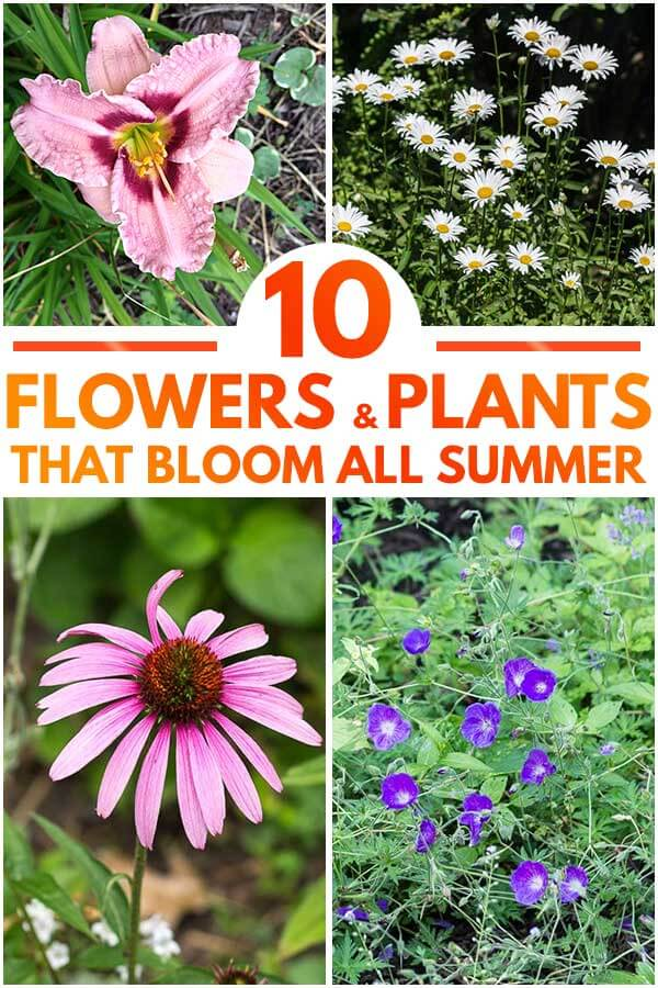 10 Flowers and Plants That Bloom All Summer