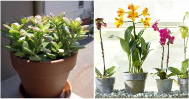 10-Indoor-Plants-That-Bring-Good-Things-For-Your-Home-ft