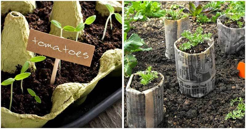 10-Inspiring-Ideas-To-Start-Seeds-You-Should-Try-ft