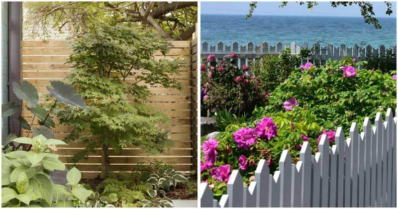 10-Stunning-Ideas-For-Backyard-Fence-ft