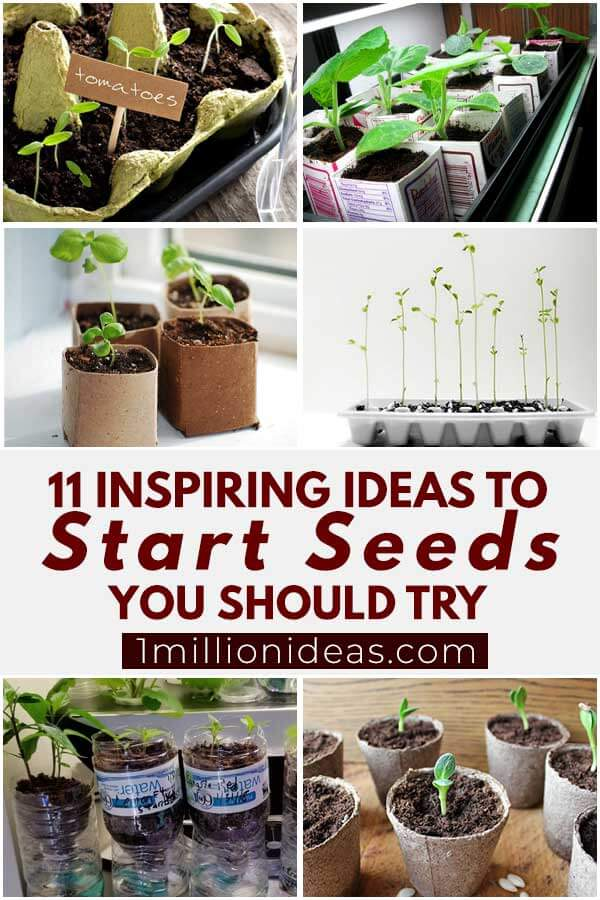 11 Inspiring Ideas To Start Seeds You Should Try