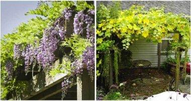12-Beautiful-Climbing-Plants-For-Pergola-ft