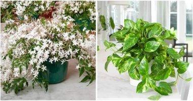 12-Easy-To-Care-Indoor-Vine-Plants-ft