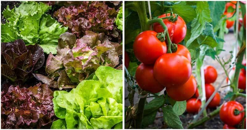 "15-""Easiest-To-Grow""-Vegetables-For-Beginning-Gardeners-ft"