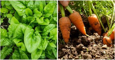 15-Vegetables-That-You-Can-Grow-and-Harvest-In-Just-A-Month-ft