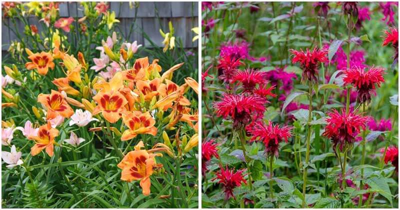 16-Perennial-Plants-To-Attract-Hummingbirds-To-Your-Garden-ft