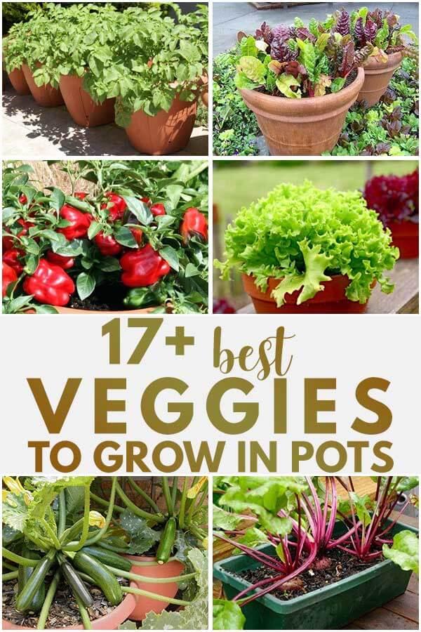 17 Best Veggies To Grow In Pots