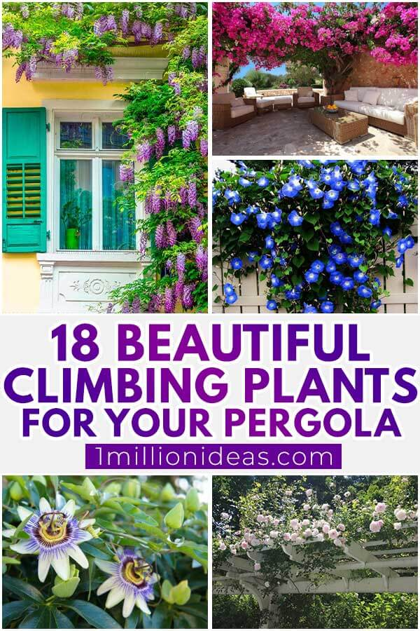 18 Beautiful Climbing Plants For Your Pergola