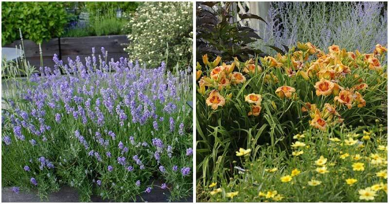 18-Garden-Plants-Worth-Your-Time-And-Money-ft