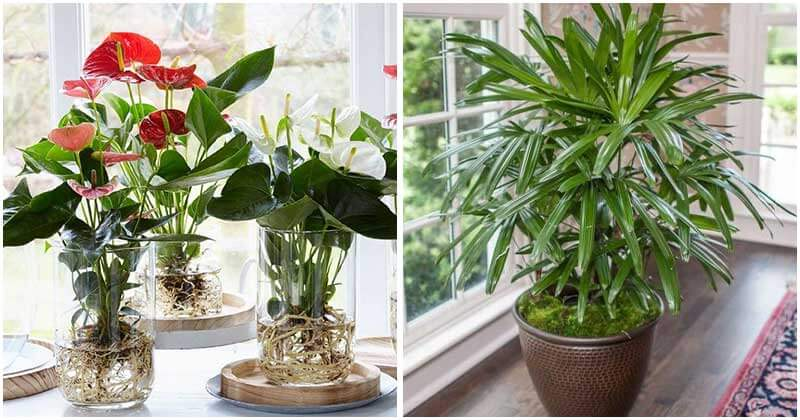25-Best-Indoor-Plants-To-Purify-Air-ft