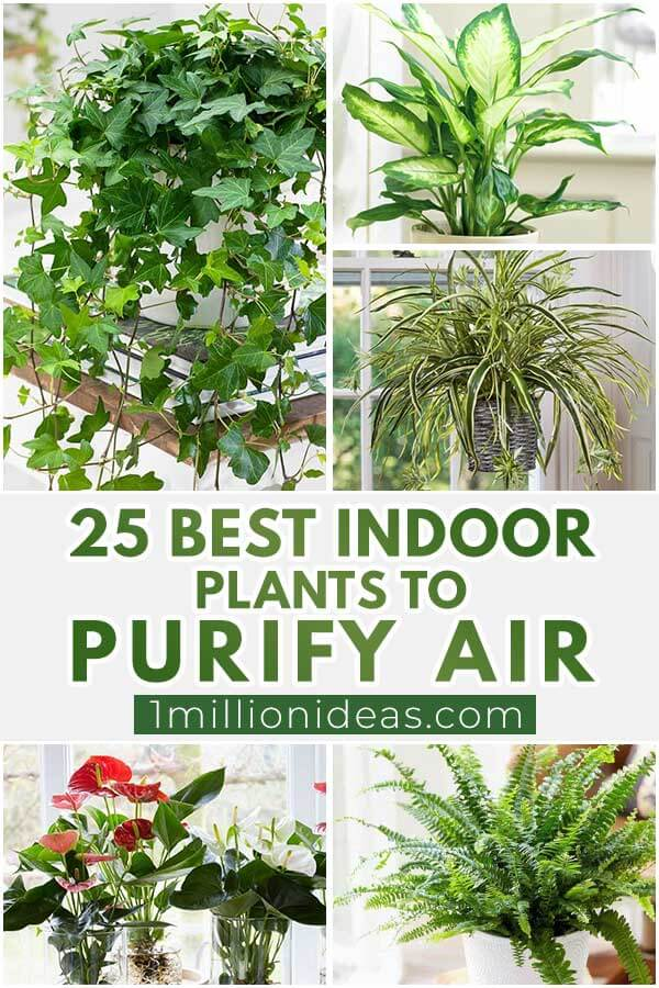 25 Best Indoor Plants To Purify Air