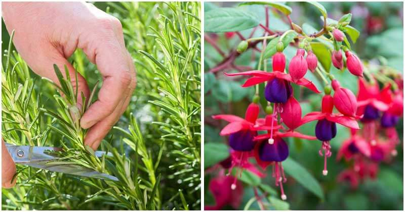 25-Best-Plants-and-Herbs-To-Propagate-From-Cuttings-ft