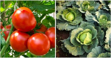 25-Plants-To-Grow-Side-By-Side-In-Your-Garden-ft