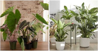 30-Beautiful-Shade-Loving-Plants-To-Grow-Indoor-ft