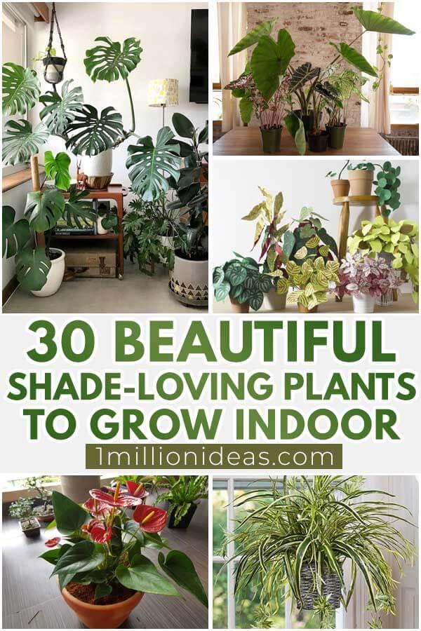 30 Beautiful Shade-Loving Plants To Grow Indoor