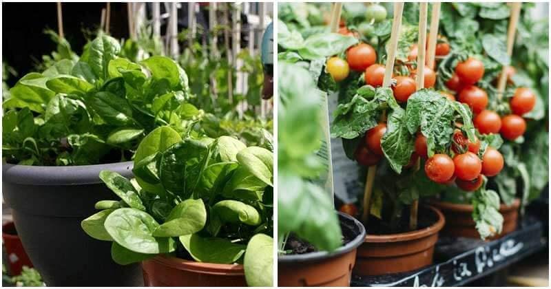 30-Best-Veggies-To-Grow-In-Potsft
