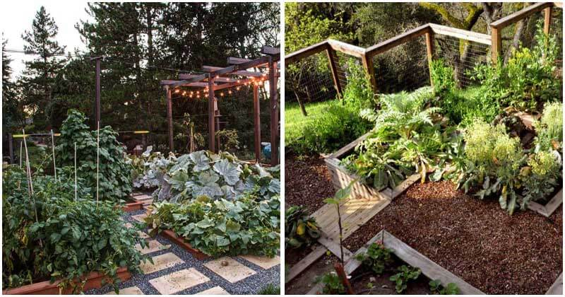 25-Brilliant-Ideas-To-Your-Turn-Backyard-Into-Vegetable-Gardenft