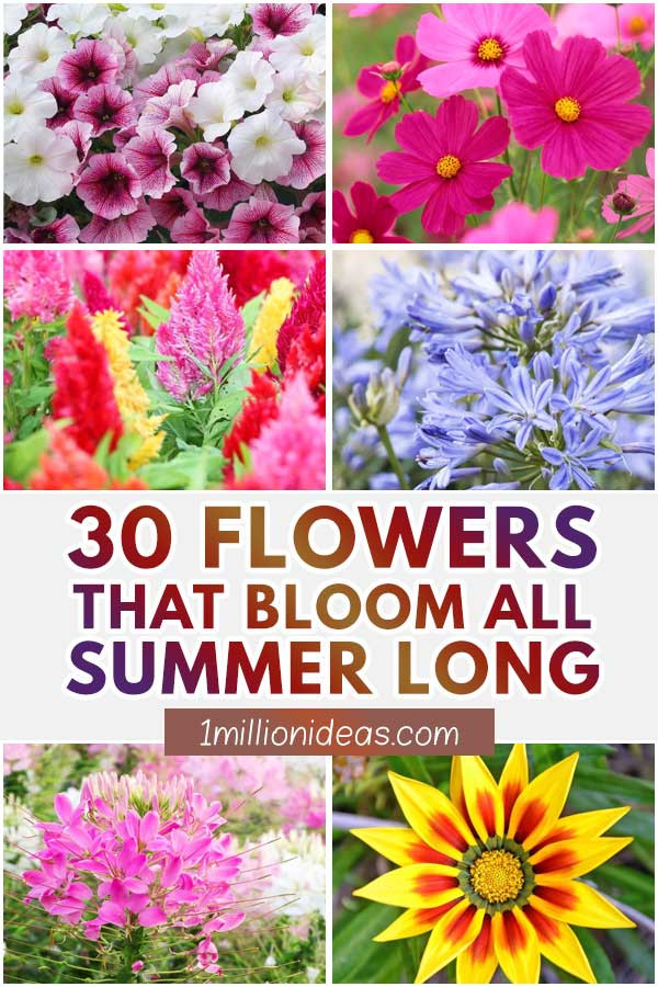 30 Flowers That Bloom All Summer Long