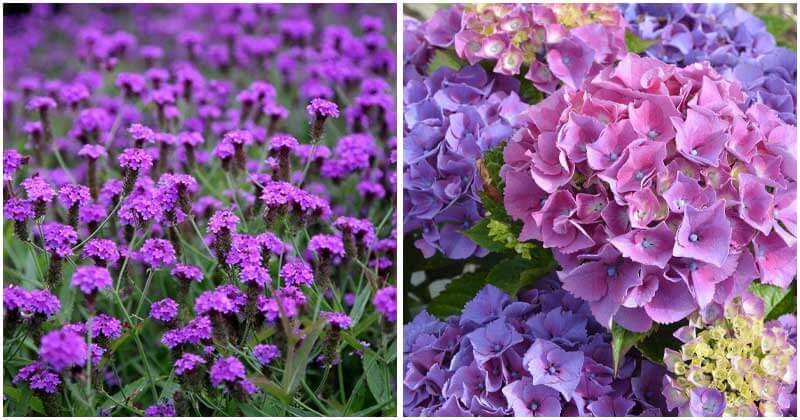 40-Stunning-Purple-Flowers-To-Grow-In-Your-Garden-ft-rv