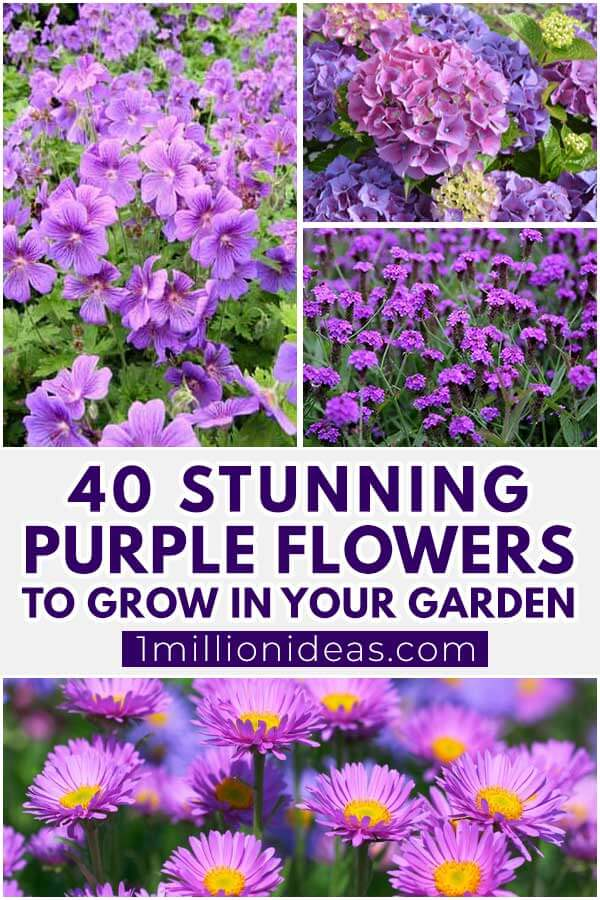 40 Stunning Purple Flowers To Grow In Your Garden