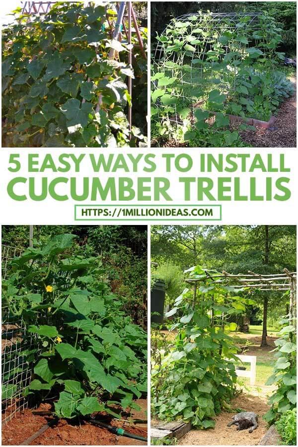 5 Easy Ways To Install Cucumber Trellis