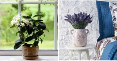 6-Plants-You-Should-Grow-In-Your-Bedroom-ft