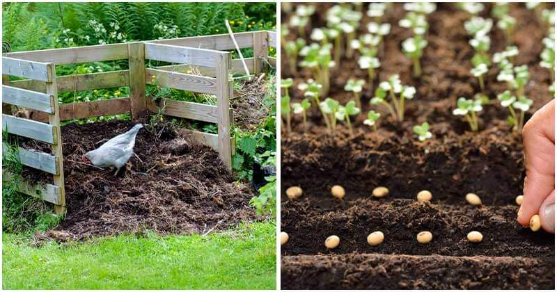 9-Gardening-Supplies-That-Are-At-No-Expense-ft