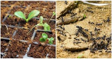 8 Amazing Uses Of Cinnamon To Plants