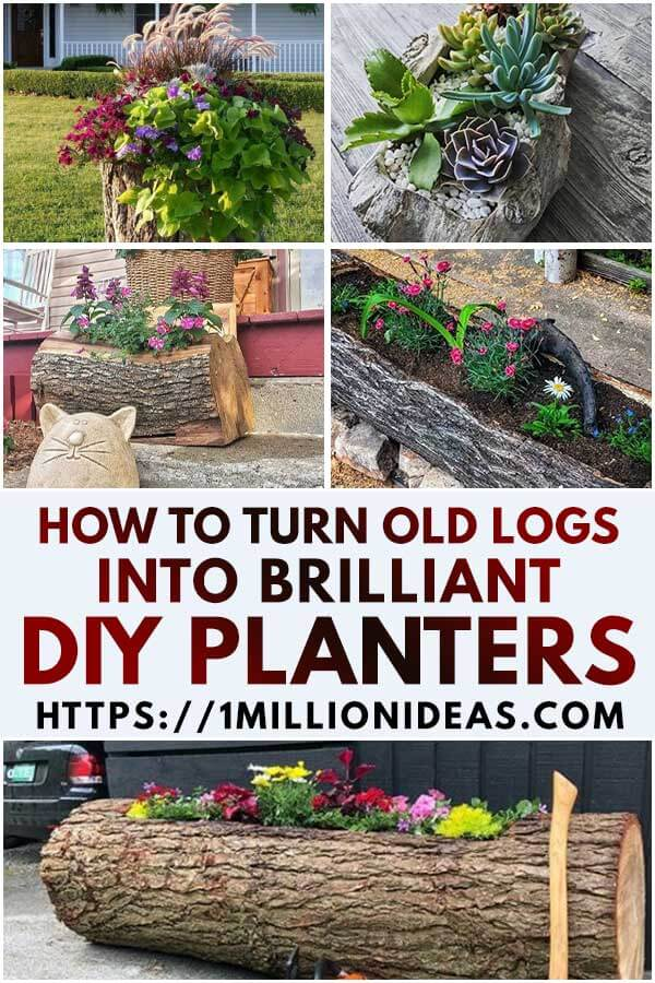 How To Turn Old Logs Into Brilliant DIY Planters