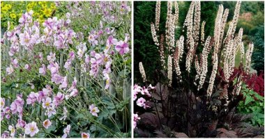10-Beautiful-Bloom-In-Shade-Tall-Perennial-Plants-ft