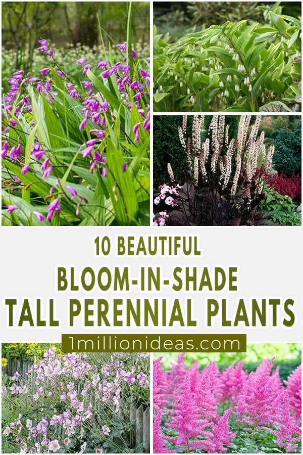 10-Beautiful-Bloom-In-Shade-Tall-Perennial-Plants