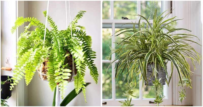 10-Beautiful-Indoor-Hanging-Plants-For-Your-Home-ft