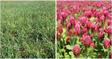 10-Best-Cover-Crops-To-Plant-For-Your-Garden-ft