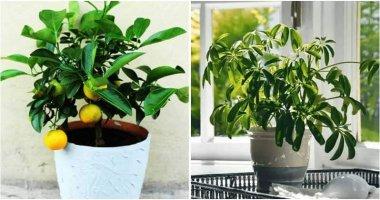10 Grow In Door Trees For Your Home