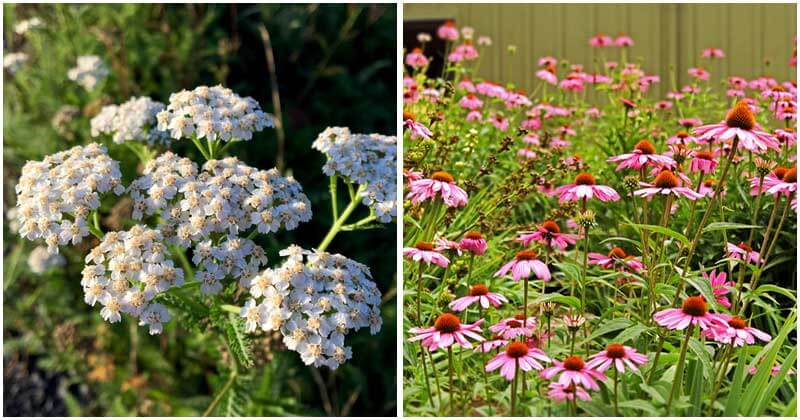 10-Perennial-Plants-That-Needs-Little-Care-ft