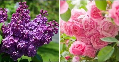 11 Most Fragrant Plants To Grow In Your Yard