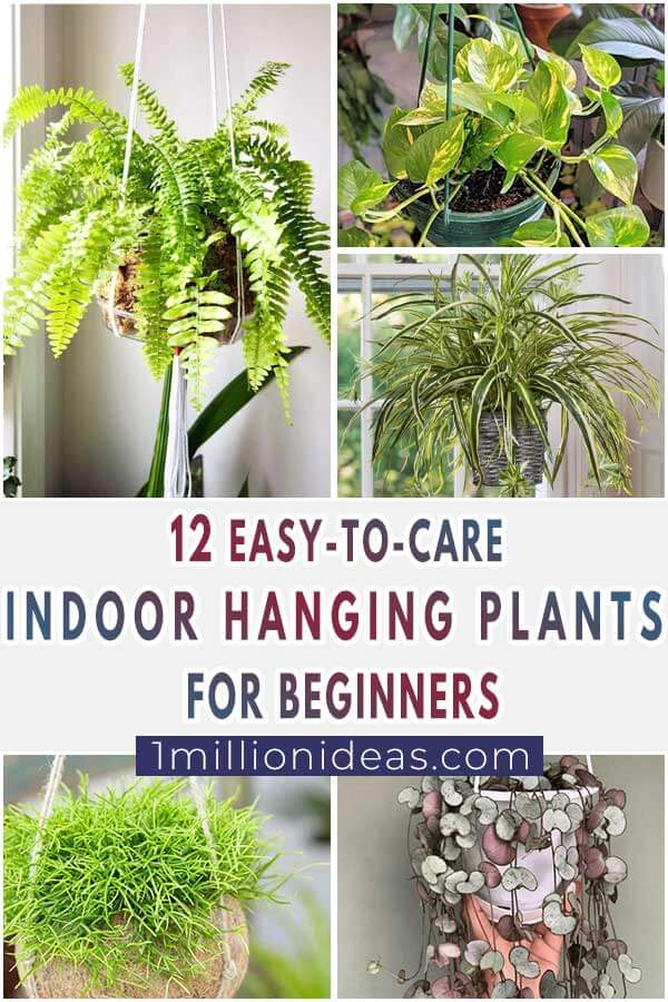12-Easy-To-Care-Indoor-Hanging-Plants-For-Beginners