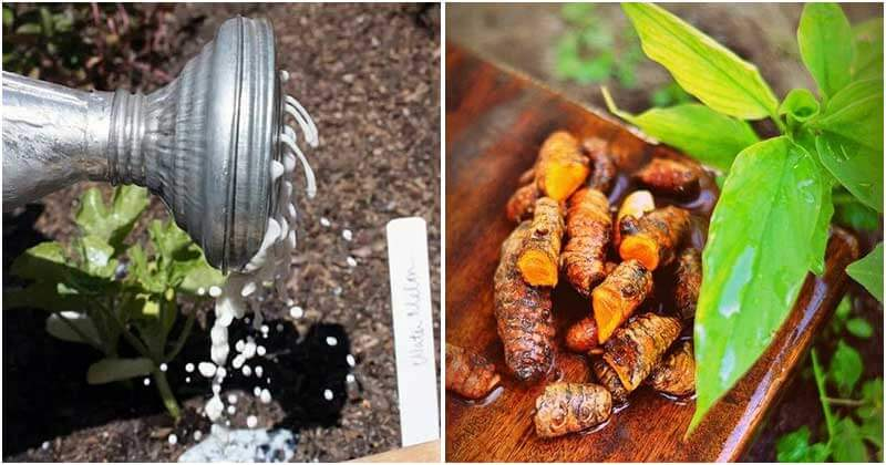 13 Powerful Non-Toxic Gardening Tips For Big Crops