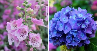 13 Toxic Flowers You Must Read