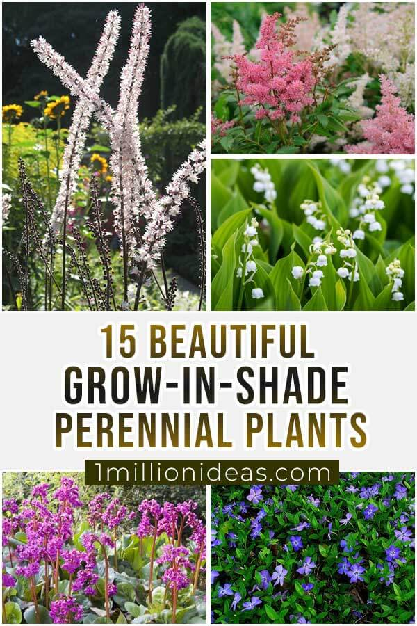 15-Beautiful-Grow-In-Shade-Perennial-Plants