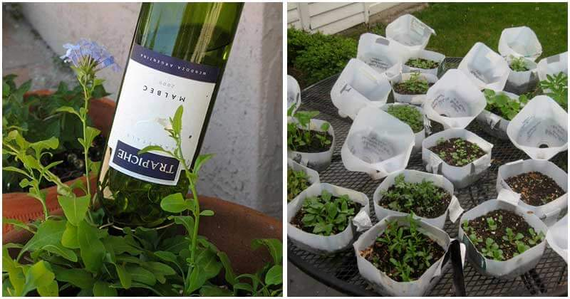 15-Simple-Gardening-Hacks-That-You-Will-Love-To-Know-ft