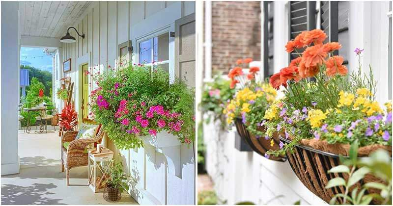 17 Beautiful Flower For Window Boxes
